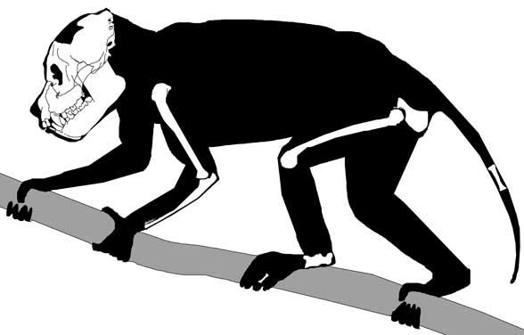 [Image: aegyptopithecus.jpg]