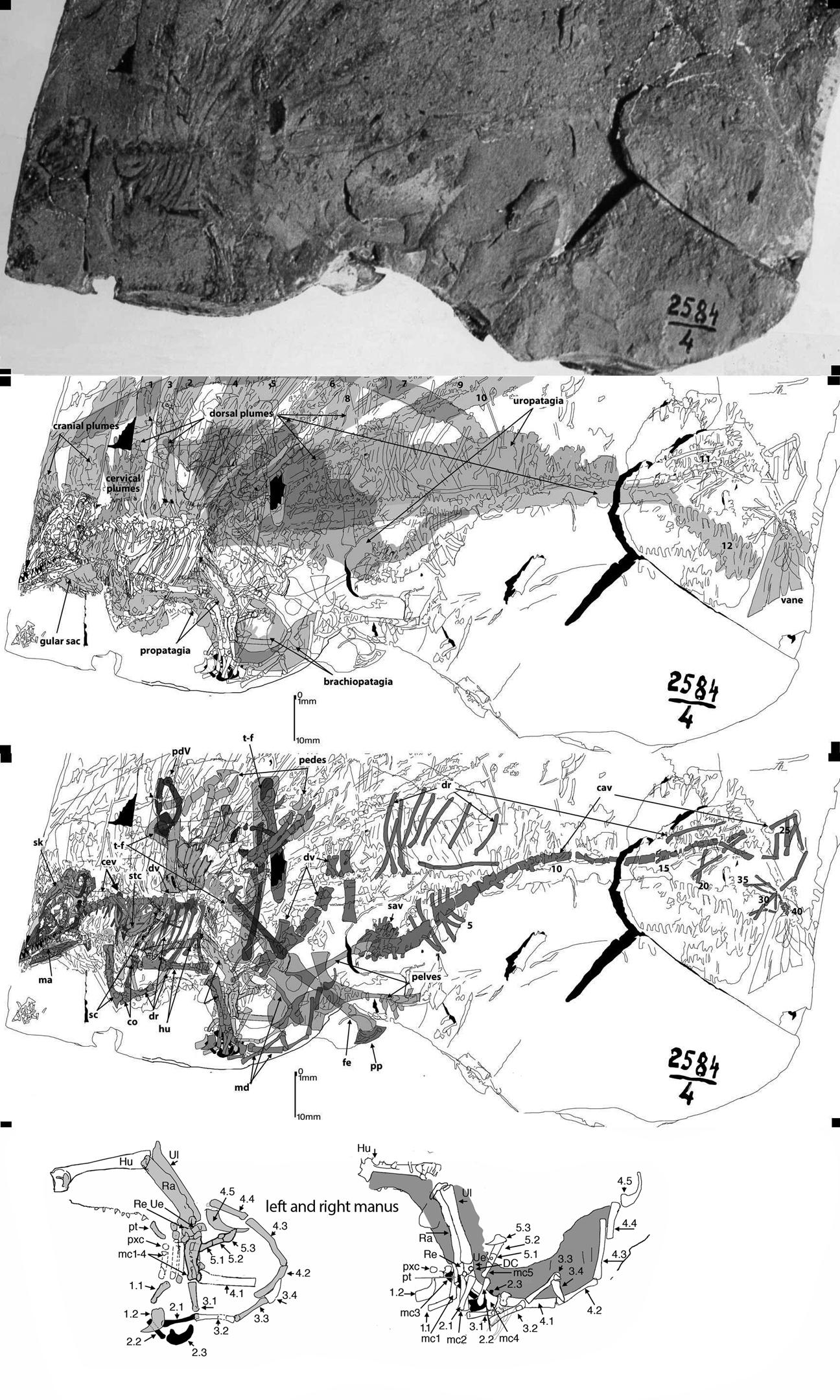 Paleofails Longisquama72-24