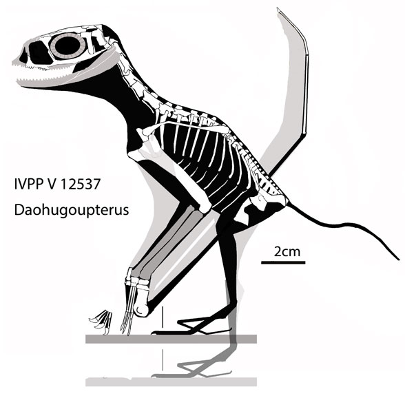 Daohugopterus lateral view