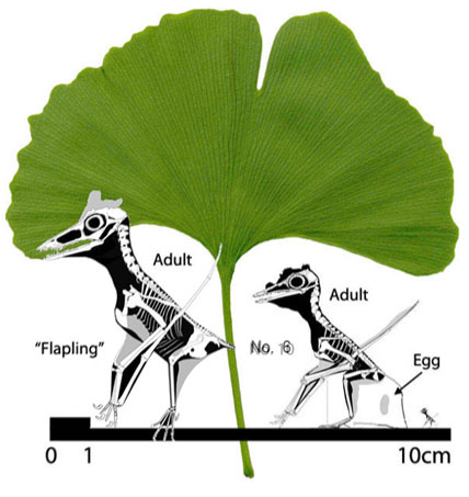 Ginkgo leaf and the smallest pterosaurs