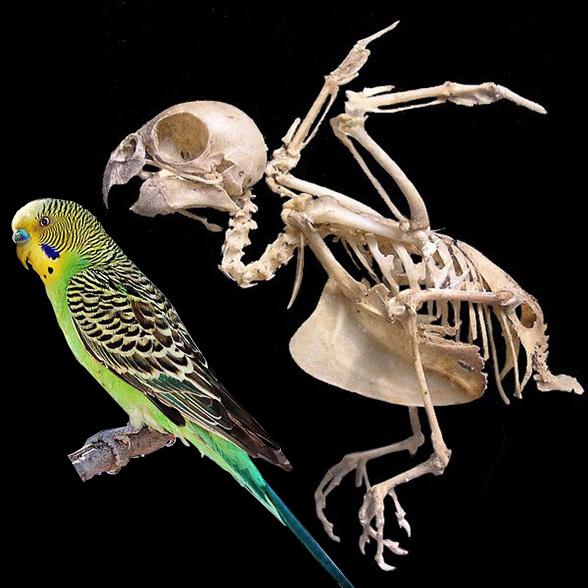 ознакомимся ними строение попугая фото такая мелочь способна